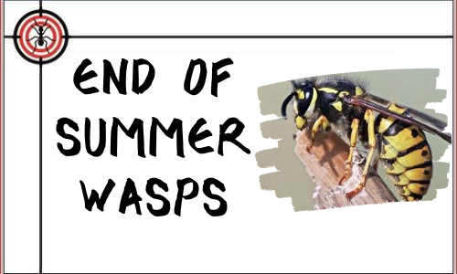 end_of_summer_wasps