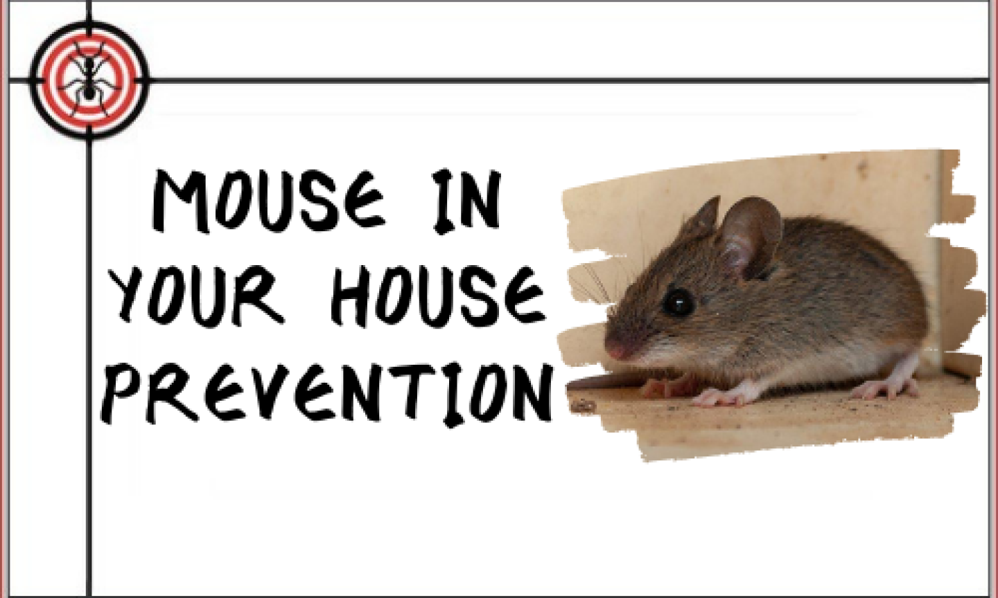 MOUSE-IN-THE-HOUSE-PREVENTION